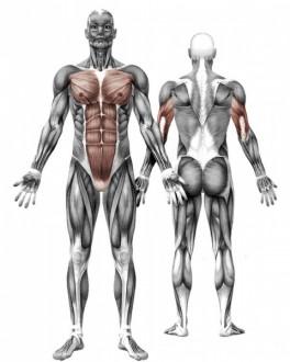 Appareil de fitness extérieur barres parrallèles - Devis sur Techni-Contact.com - 4