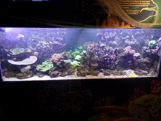 Aquarium en plexiglas - Devis sur Techni-Contact.com - 5