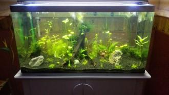Aquarium en plexiglas - Devis sur Techni-Contact.com - 6