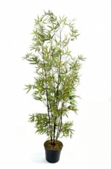 Arbre bambou black - Devis sur Techni-Contact.com - 1