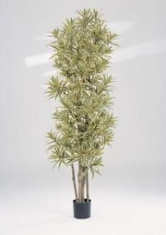 Arbre dracaena reflexa artificiel - Devis sur Techni-Contact.com - 1