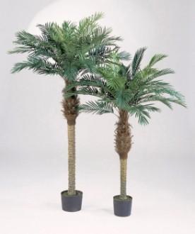 Arbre phoenix palm artificiel - Devis sur Techni-Contact.com - 1