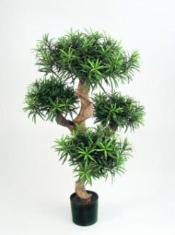 Arbre podocarpus semi naturel - Devis sur Techni-Contact.com - 1