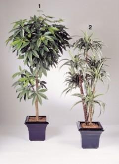 Arbre semi naturel de dracaena - Devis sur Techni-Contact.com - 1