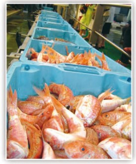 Bac à poisson emboîtable et gerbable - Devis sur Techni-Contact.com - 2