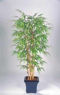 Bambou semi naturel - Devis sur Techni-Contact.com - 1