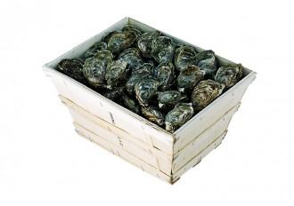 Barquette d'emballage en bois pour huître et coquillages - Devis sur Techni-Contact.com - 2