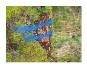 Bombe de marquage forestier - Devis sur Techni-Contact.com - 3