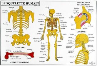 Carte du corps humain - Devis sur Techni-Contact.com - 1