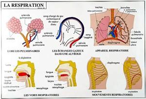 Carte du corps humain - Devis sur Techni-Contact.com - 4