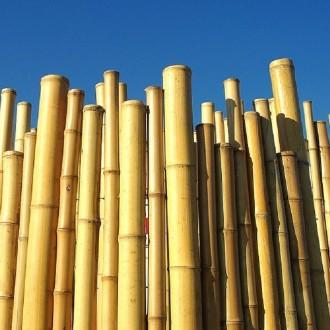Clôture bambou - Devis sur Techni-Contact.com - 3