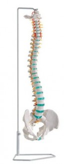 Colonne vertébrale standard livrée avec support - Devis sur Techni-Contact.com - 1