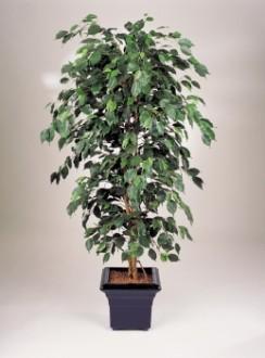 Ficus exotique artificiel - Devis sur Techni-Contact.com - 1