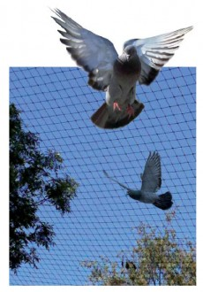 Filet de protection anti-pigeons - Devis sur Techni-Contact.com - 1