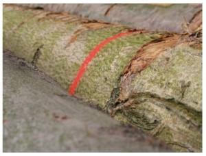 Peinture forestière fluorescente - Devis sur Techni-Contact.com - 3