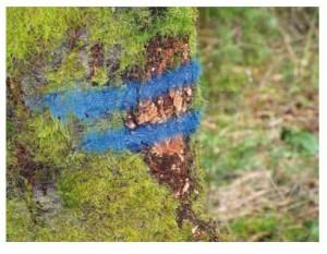 Peinture forestière non fluorescente longue durée - Devis sur Techni-Contact.com - 2