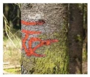 Peinture forestière non fluorescente longue durée - Devis sur Techni-Contact.com - 3