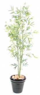 Plante d'extérieur bambou - Devis sur Techni-Contact.com - 1