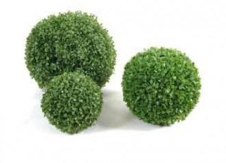 Plante d'extérieur buis boule - Devis sur Techni-Contact.com - 1