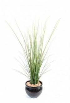 Plante d'extérieur herbe de riviere - Devis sur Techni-Contact.com - 1
