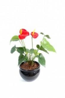 Plante fleurie artificielle anthurium - Devis sur Techni-Contact.com - 1