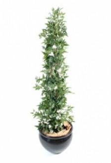 Plante fleurie jasmin - Devis sur Techni-Contact.com - 1