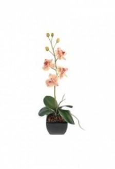 Plante fleurie phalaenopsis small - Devis sur Techni-Contact.com - 1