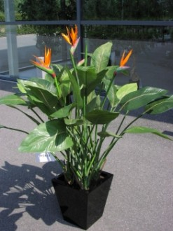 Plante fleurie strelitizia artificielle - Devis sur Techni-Contact.com - 1