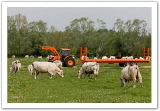 Remorques agricoles à plateaux fourragers - Devis sur Techni-Contact.com - 1