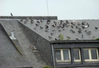 Repulsif anti-pigeons - Devis sur Techni-Contact.com - 1