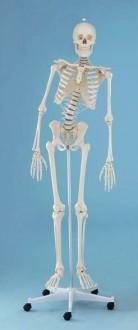 Squelette flexible 1m70 - Devis sur Techni-Contact.com - 2