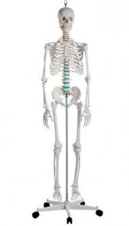 Squelette standard - Devis sur Techni-Contact.com - 1