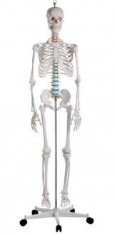 Squelette standard 1m70 - Devis sur Techni-Contact.com - 1