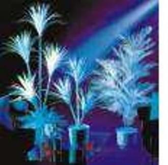 Végétaux Fluorescents - Devis sur Techni-Contact.com - 1