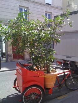Vélo calèche - Devis sur Techni-Contact.com - 5