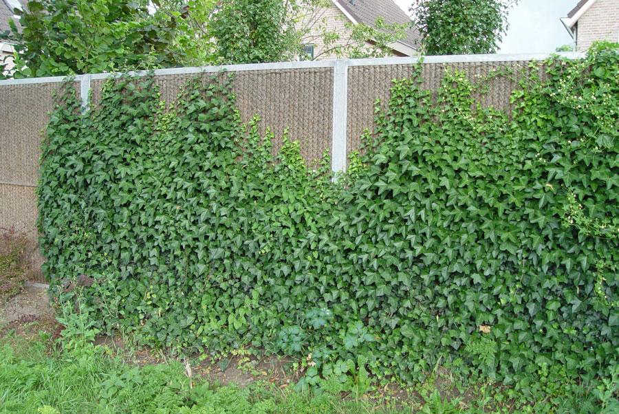 mur anti bruit jardin mur anti bruit jardin conseils. Black Bedroom Furniture Sets. Home Design Ideas