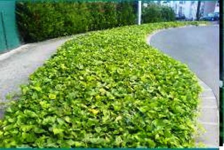 Prix sur demande - Tapis chauffant pour plante ...